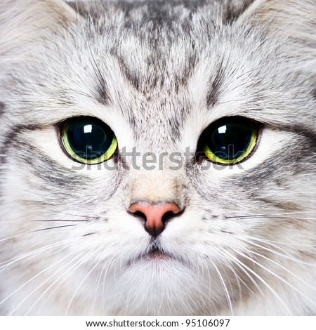 Close-up portrait of a kitten with big green eyes - stock photo