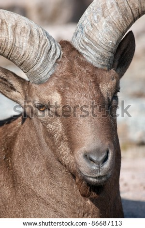 close-up portrait of a male east caucasian tur - stock photo