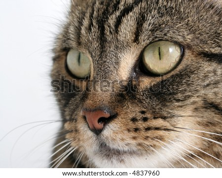 Close-up portrait of a tabby cat - shallow depth of field with focus on right eye - stock photo