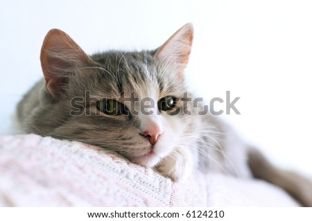 close-up portrait of adorable cat lays on sofa (shallow DOF) - stock photo