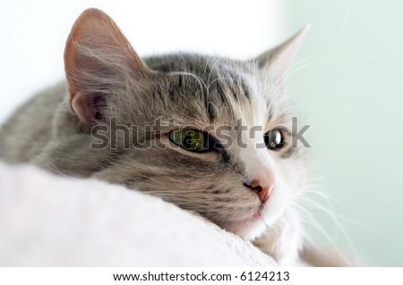 close-up portrait of beautiful kitten lays on sofa (shallow DOF) - stock photo