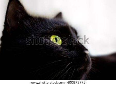 Close up portrait of black cat with green eyes  - stock photo