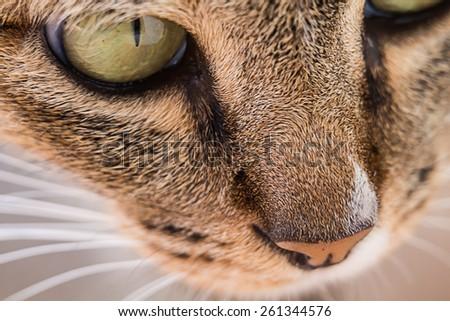 Close up portrait of  cat face - stock photo