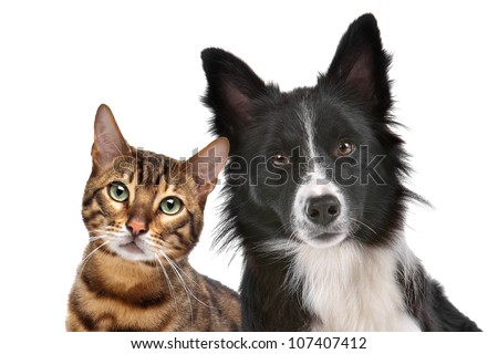 Close up portrait of dog and cat in front of white background - stock photo