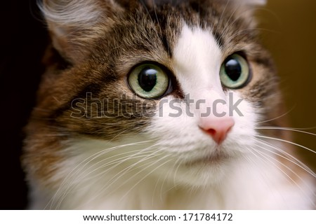 Close up portrait of green-eyed cat - stock photo