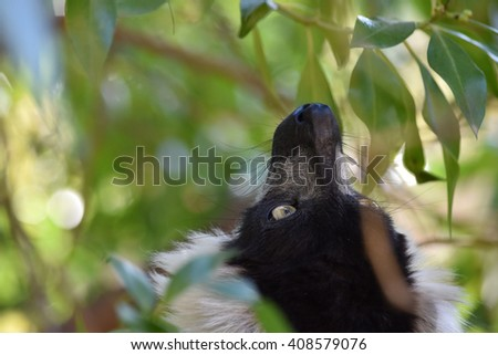 Close-up portrait of lemur. - stock photo