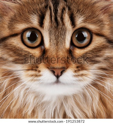 Close-up portrait of pretty young cat  - stock photo