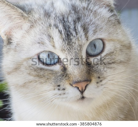 Close up portrait of tabby house cat. - stock photo