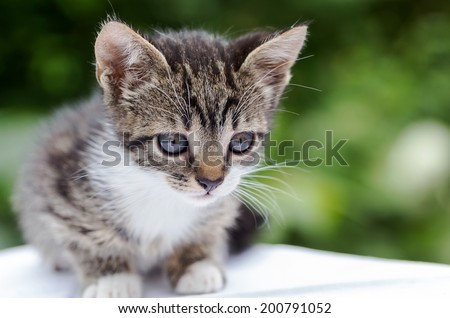 Close-up portrait of tabby kitten - black and white  - stock photo