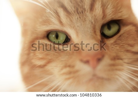 close up portrait shot of a pet cat, not really looking all cute and cuddly more like it's seen something it wants - stock photo