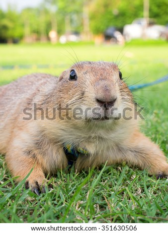 close up prairie dog's face
