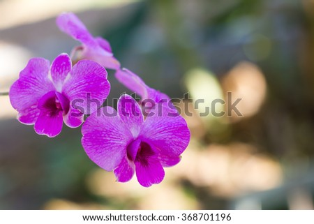 Close up purple orchids which are elegant background blur blooming in a garden. - stock photo