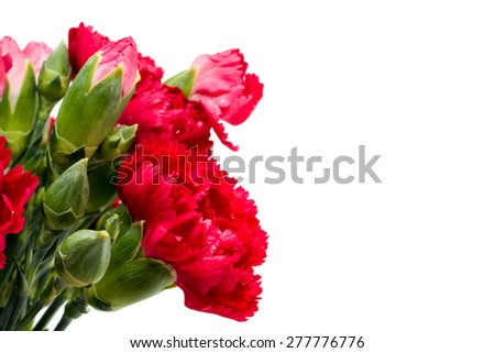 Close up Red carnation isolated on white background - stock photo
