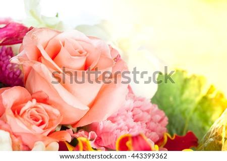 close up rose flower - stock photo