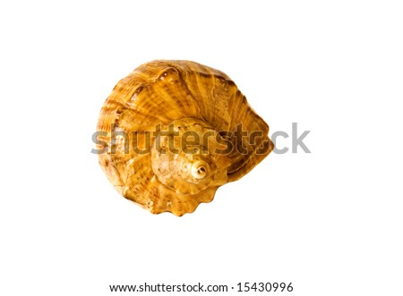 close-up sea shell isolated on white - stock photo