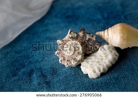 close up seashell on blue background - stock photo