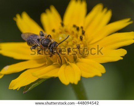 close up selected focus bee and small yellow flower with green leaf on the background