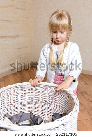 Close up Serious Blond Little Girl Looking at Sphynx Kittens in a White Basket at Home. - stock photo