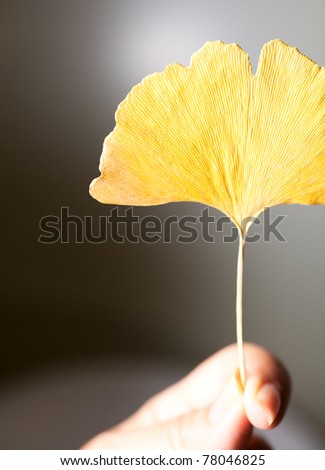 Close up shoot on the leaf. - stock photo