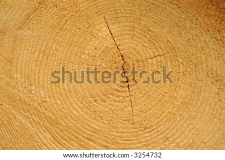 Close-up shot from wood - stock photo