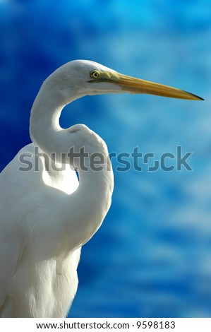 Close-up shot of a bird (crane) - stock photo