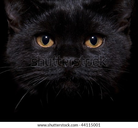 Close-up shot of a black cat with orange eyes - stock photo
