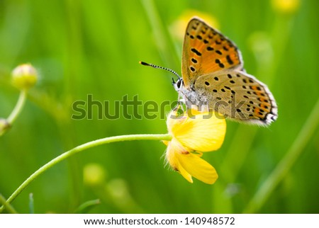 close up shot of a butterfly on a leaf with a green background - stock photo