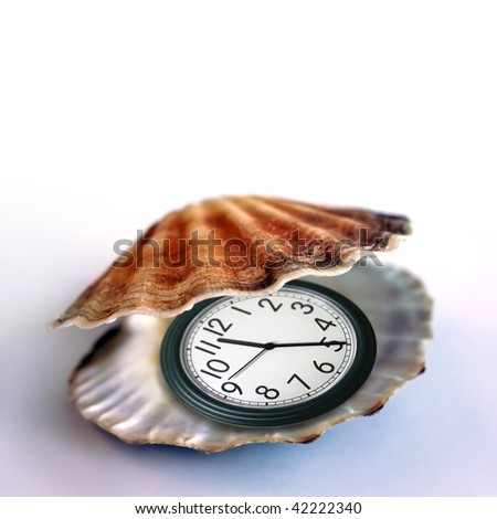 close up shot of a clock in a shell