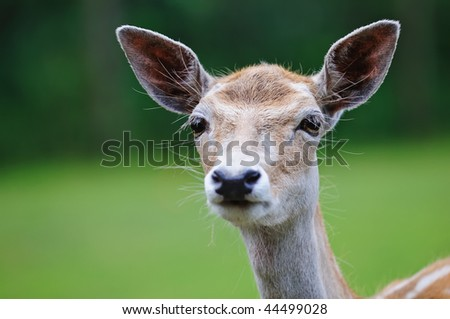 Close up shot of a deer in nature. Focus is on the eye.