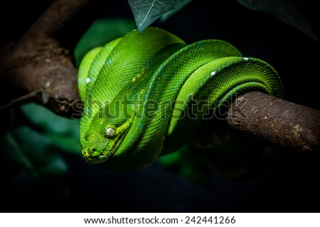 close up shot of a green snake is on a branch - stock photo