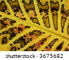 close up shot of a leaf in autumn - stock photo