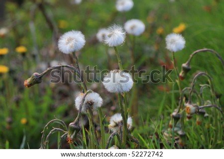 Close up shot of a spring meadow - stock photo