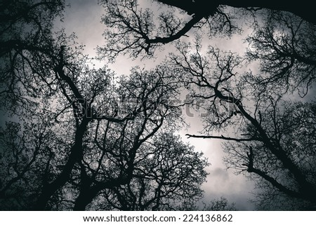 Close up shot of an spooky canopy treetop - stock photo