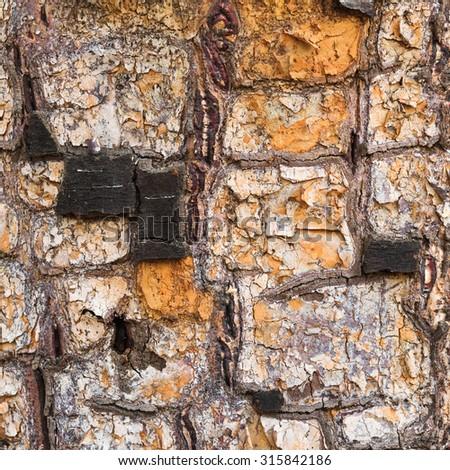 close-up shot of birch cork - stock photo