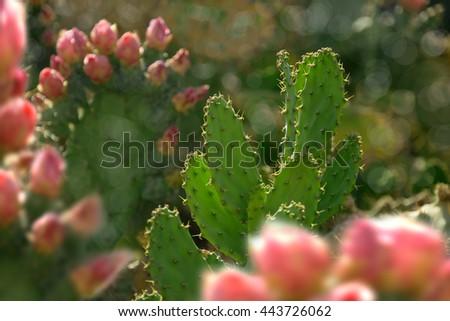 close up shot of cactus flower - stock photo