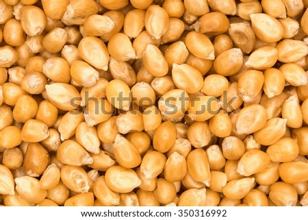 close up shot of corn seeds background