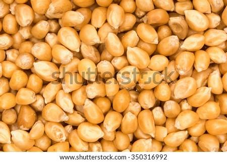 close up shot of corn seeds background - stock photo