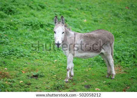 Close up shot of donkey in the Meadow
