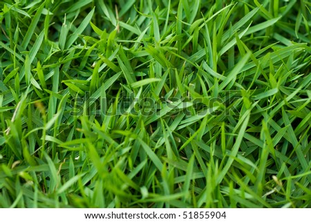 Close-up shot of fresh green grass. - stock photo