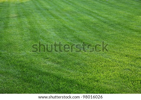 Close up shot of fresh spring green grass.