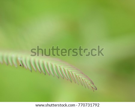 Close up shot of single leaf fronds of a plant near a rice field in Thailand