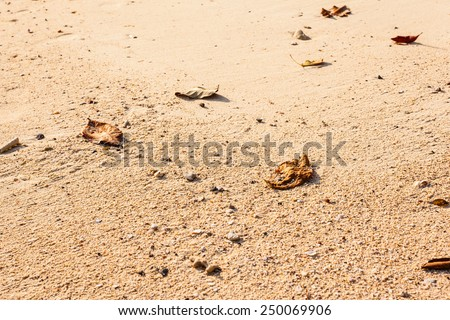 close up shot of the sand on the beach with some dead leaves