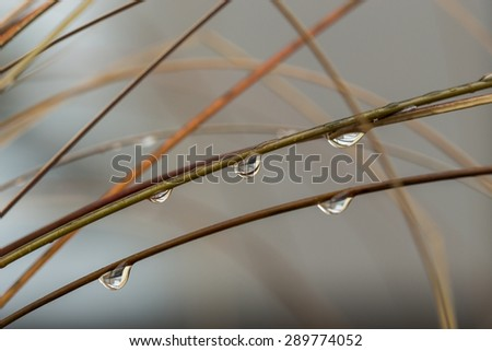 Close up Shot of Wet Grasses with Raindrops During Autumn Season