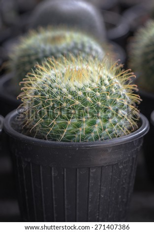 Close up small cactus in a pot - stock photo