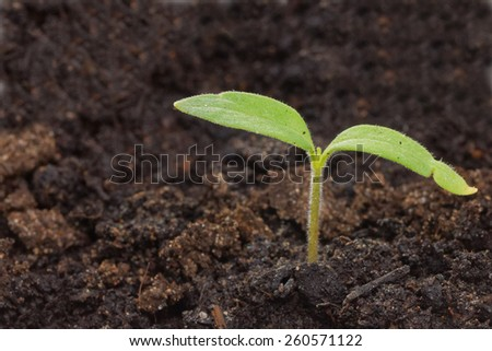 Close up small green sprout in dirt soil - stock photo