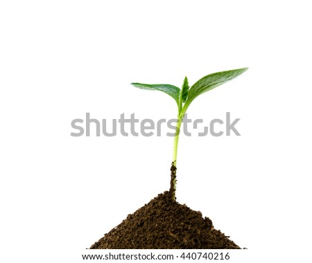Close-up small green young plant growing up from black heap soil over isolated white background. Green spout for save/safe conservation environment. Organic growing, clean ecosystem concept.Copyspace. - stock photo