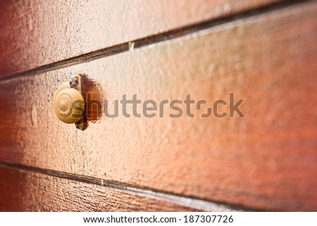 Close up snail ,isolated on wooden wall background  - stock photo