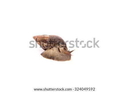 Close up snail on the white background isolated