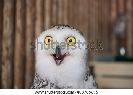 Close up snowy owl eye with wooden background - stock photo