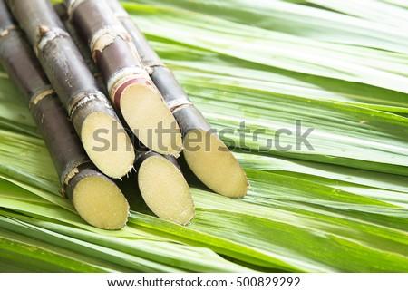 Close up Sugarcane.